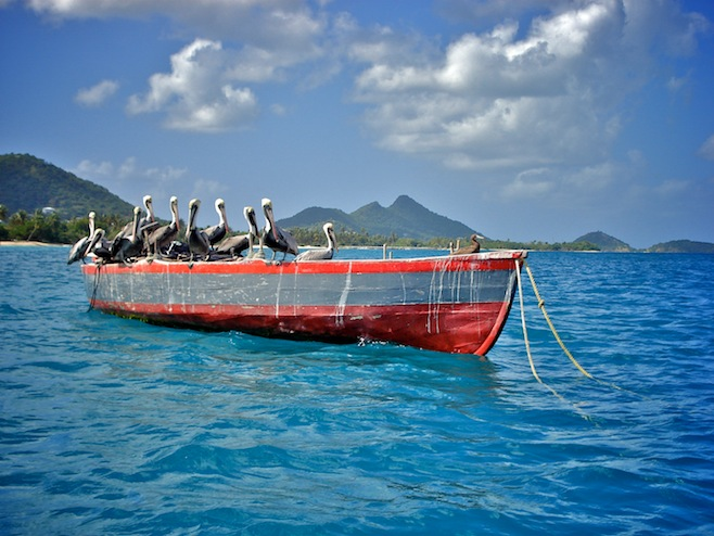 Gre Carriacou Pelicans