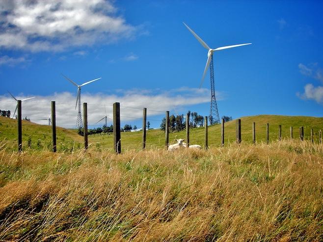 NZ Wind Farm1
